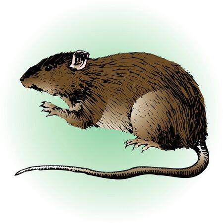 living organism: Rat