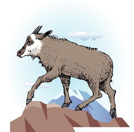 antelope: Antelope