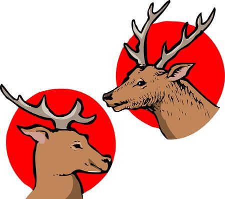 mammalia: Deer