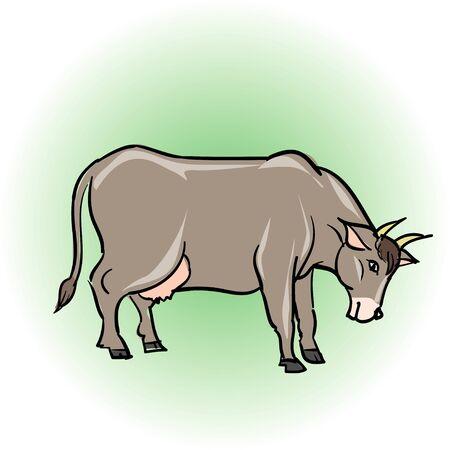 bovine: Bovine