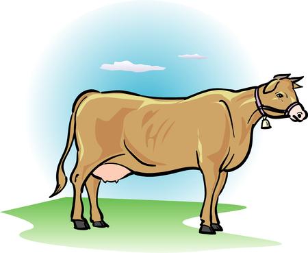 bovine: Jersey