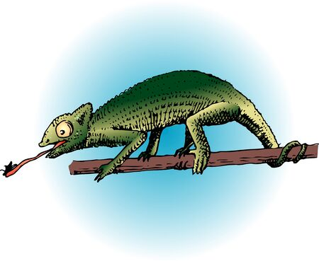 chameleon: Chameleon Stock Photo
