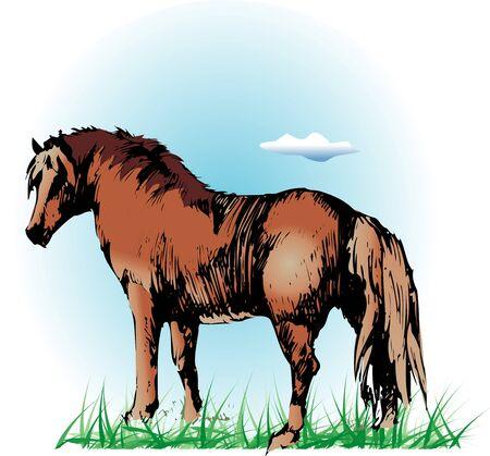 equine: Equine