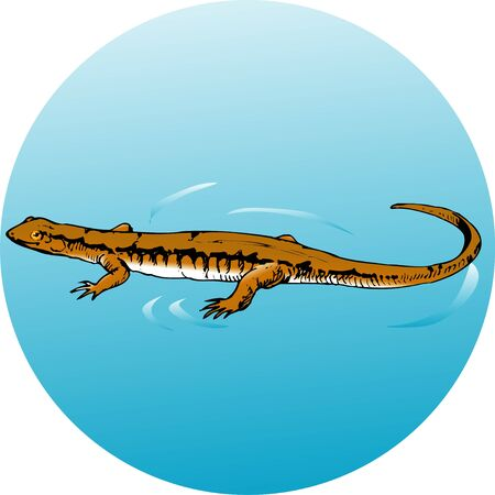 Hakone salamander