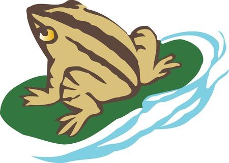 go back: Frog Stock Photo