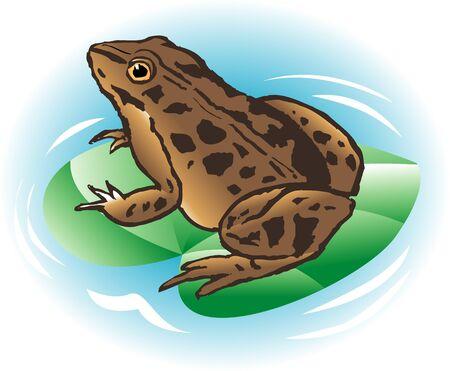 rana: Rana nigromaculata