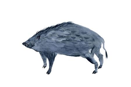 sumi: Wild boar