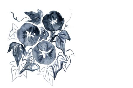 나팔꽃 스톡 콘텐츠