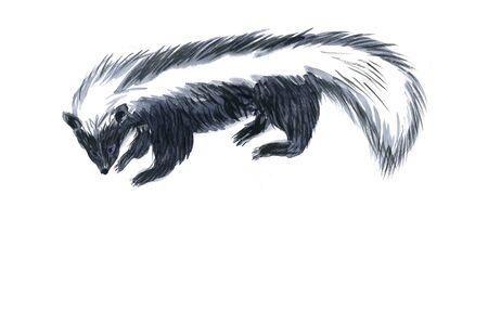 sumi: Skunk