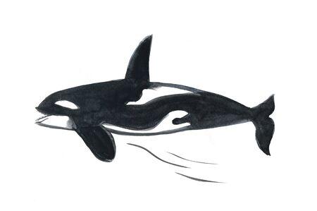 orca: Orca
