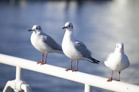 birds scenery: Sea Gull Stock Photo