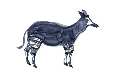 living thing: Okapi Stock Photo