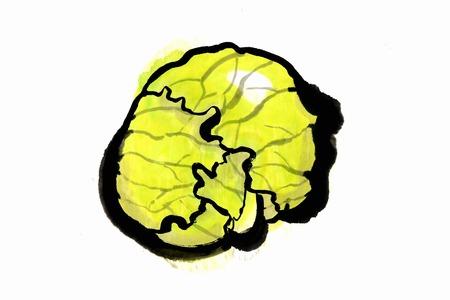 commodity: Cabbage Stock Photo