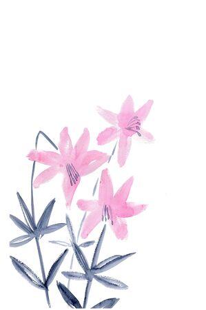 lilium: Lily