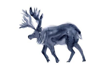 living organism: Reindeer