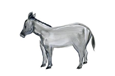 sumi: Donkey Stock Photo