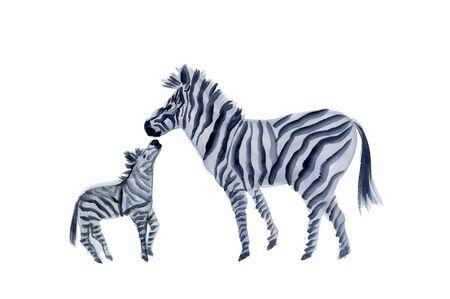 sumi: Zebra Stock Photo