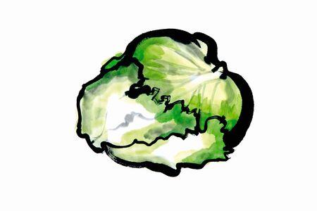 sumi: Lettuce