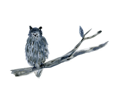sumi: Owl Stock Photo