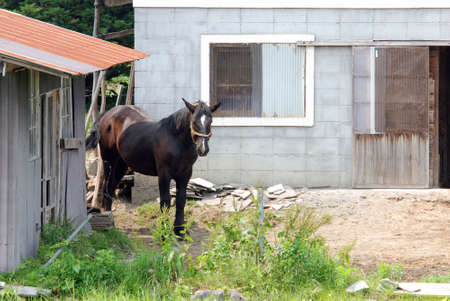 遠野酪農の家