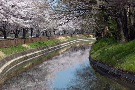 substitute: Minuma rice field-Minuma substitute water eastern Nanburyotsuji