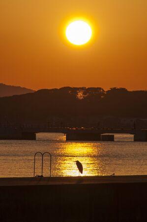 nestled: One bird of heron nestled in the sunset