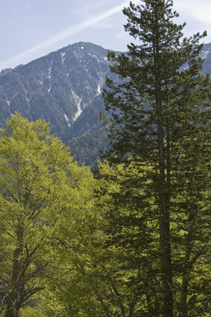 lingering: The fresh green of the trees and the Northern Alps