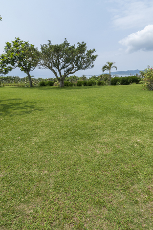 subtropical plants: Subtropical plants and the sea to the lawn of the previous