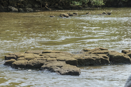 引き潮は、岩の多い川下
