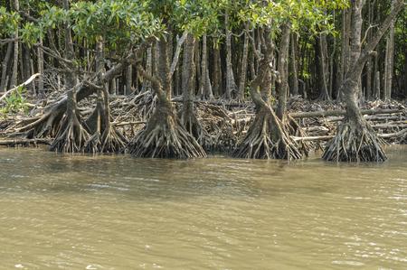 mangrove: Mangrove group dough