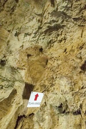 石垣島の洞窟内部