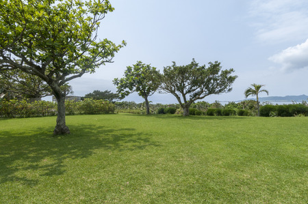 subtropical: Subtropical plants and the sea to the lawn of the previous