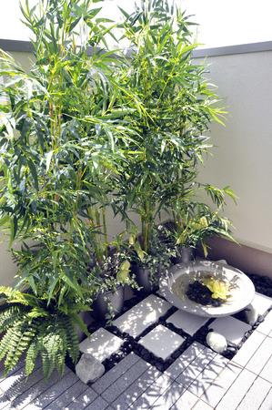 small garden: Small garden veranda