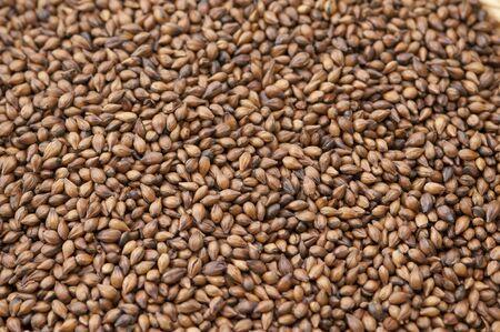 大麦のアップ 写真素材 - 47704870