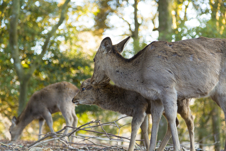 deer  spot: Parent-child deer of Nara Park