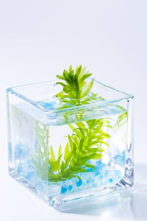 waterweed: Waterweed of glass Stock Photo
