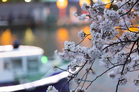 waterbus: Okawas Sakura and cruise ships