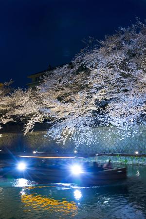 hydrophobic: Okazaki hydrophobic cherry blossoms and ten Ishifune