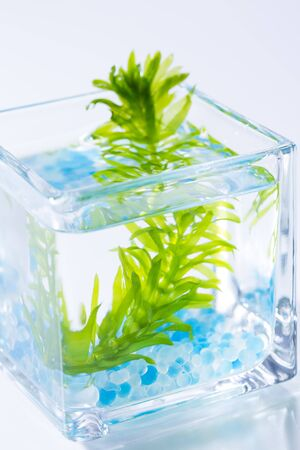 ガラスの水草 写真素材