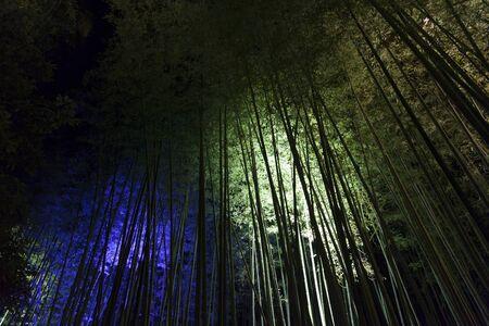 light up: Light up a bamboo grove