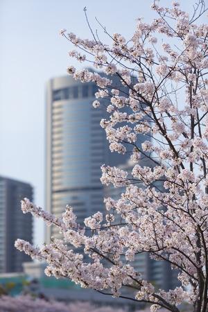 oap: Sakura and Osaka Amenity Park of Okawa