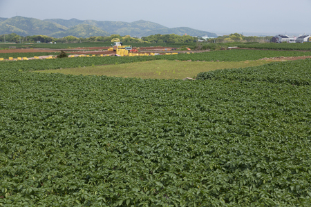 nagasaki: Unzen, Nagasaki Prefecture of potato field Stock Photo