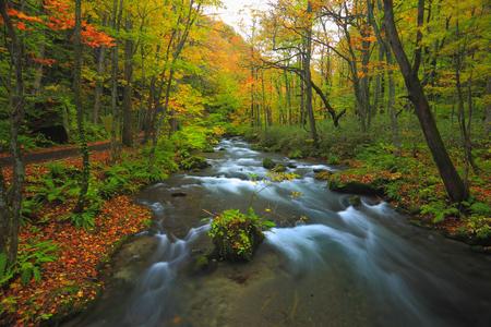 Oirase mountain stream of autumn leaves 写真素材