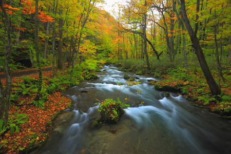 Oirase mountain stream of autumn leaves 版權商用圖片
