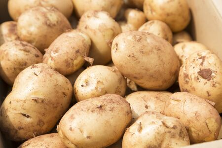 has been: New potato that has been harvested Stock Photo