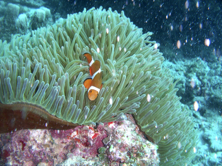 plancton: Fotos bajo el agua Foto de archivo