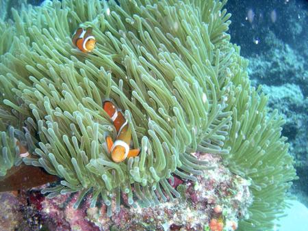 plankton: Fotos bajo el agua Foto de archivo