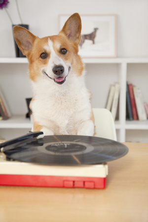 turntable: Turntable and Corgi