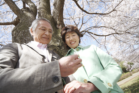 Elderly couple to see the cherry blossoms