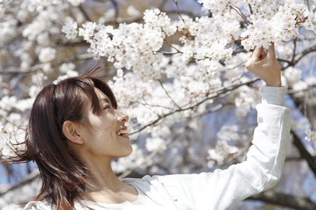 hold ups: Woman to the cherry blossoms